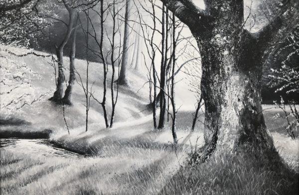 Gisburn Forest Ribble Valley
